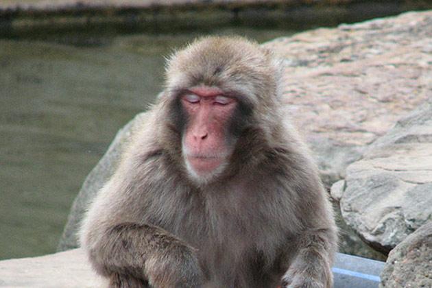 Affenversuche-Nachrichten