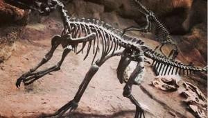 Argentinien groesste Dinosaurier-Art Nachrichten