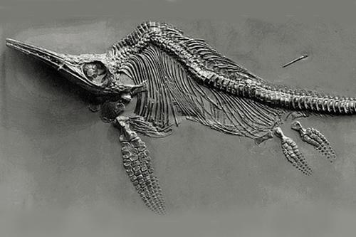 Fischsaurier-Arten