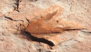 Ichniotherium praesidentis Dinosaurier Bochum Nachrichten