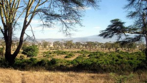 Klimamodell-Afrika-Wald