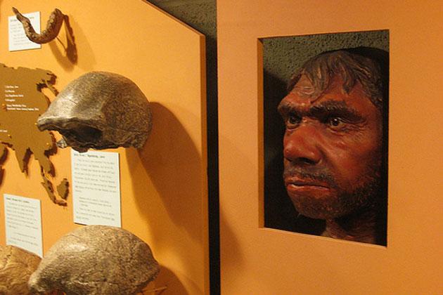 Neandertaler-klonen-Wissenschaft