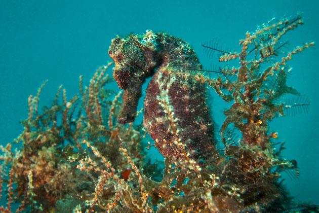 Ozeanversauerung traegt offenbar zu Klimawandel bei