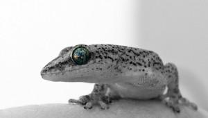 Raumfahrt Geckos