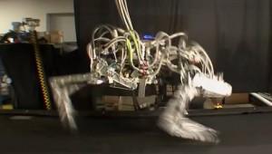 Roboter-Gepard stellt Temporekord auf BSP Grafik