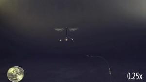 Roboterfliege Forschung Roboter-Insekt
