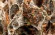 Termiten Roboter Gebaeude