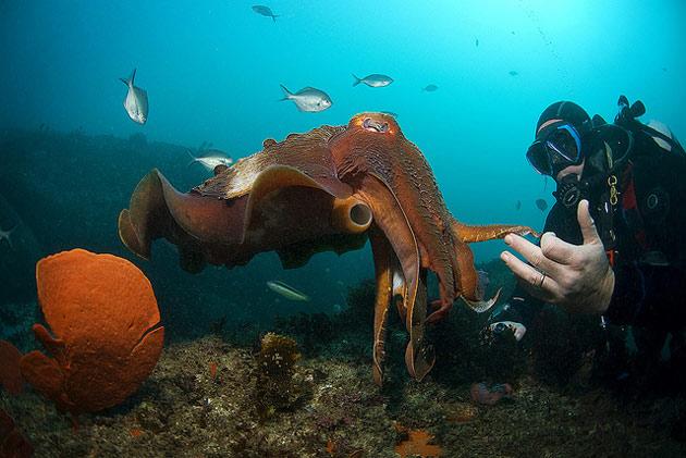 Tintenfisch-Arme-Oktopus