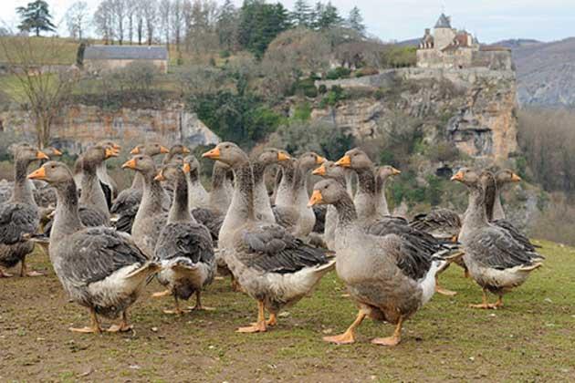 Vogelgrippe-Deutschland-H7N9-Symptome
