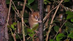 rote-liste-2013 tiere-arten